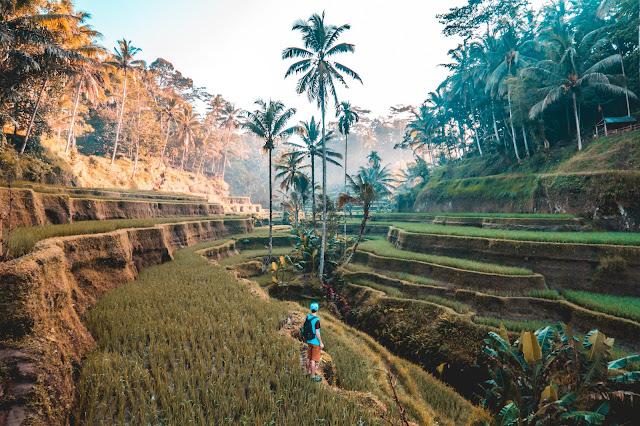 Terraced hills in Bali