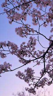 خلفيات أندرويد زهور