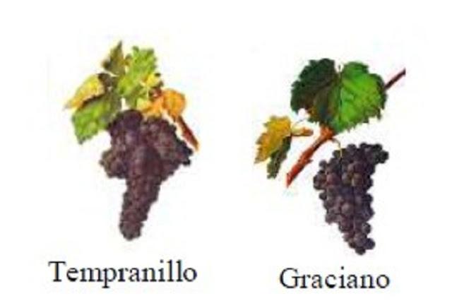 Nho Tempranillo và Graciano