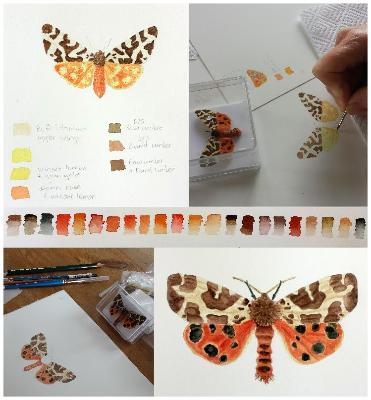 Student's work - Illustrating Butterflies & Moths