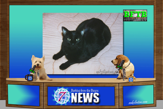 BFTB NETWoof News set with black cat