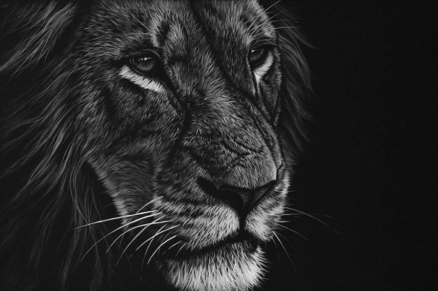Fonds D Ecran Hd Fond D Ecran Lion Hd