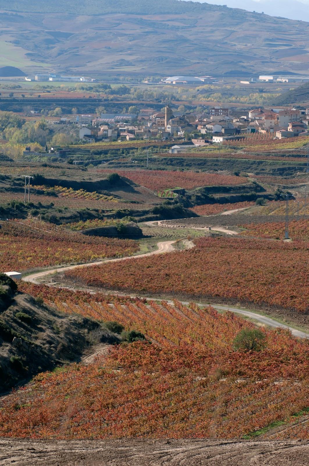 La Ruta del Vino de Rioja Alavesa se suma a la celebración