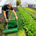 Regarding Urban Farming and how to do it