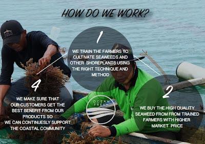 Ocean Fresh berkomiten membina masyarakat untuk memanfaatkan rumput laut