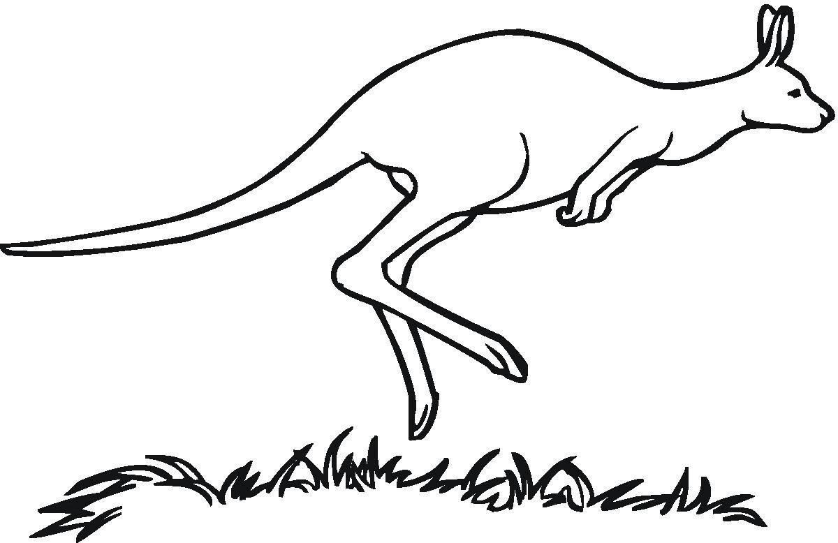 Koleksi Sketsa Gambar Kanguru Dan Anaknya