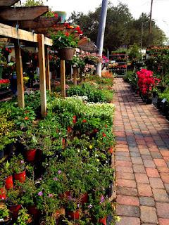 flowers, gardens, audubon park, orlando