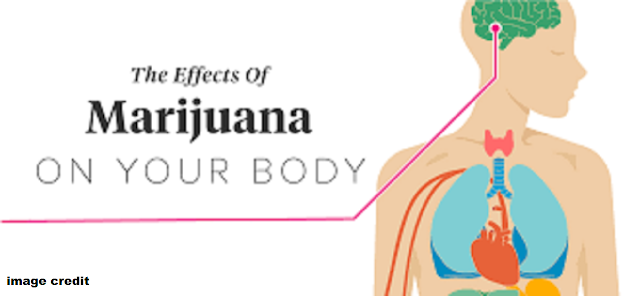a review of the effects of marijuana on the human body Is marijuana safer than alcohol, or vice versa each substance has different effects on the body here's how the two compare in most cases, these effects have been studied in heavy, chronic.