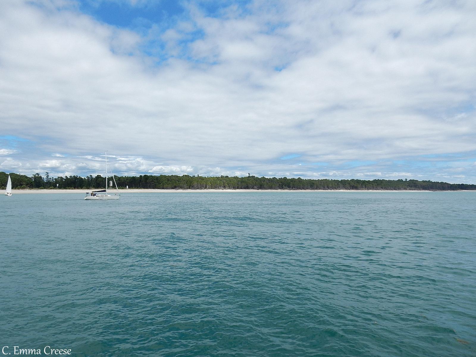 Wild dolphins in Tauranga New Zealand - Love Travel Linkup