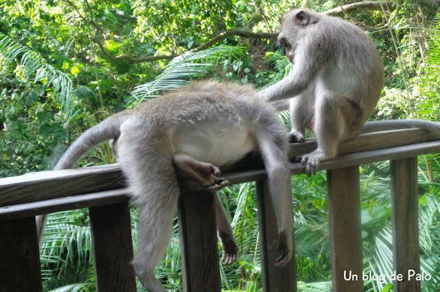 templo de los monos en Ubud, Bali