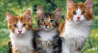 Mengapa Kucing Menoleh Saat Di Panggil Pus? Ini Alasannya!