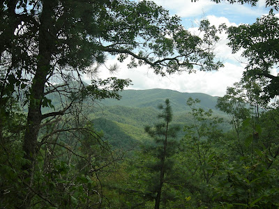 view from laurel falls hiking trail.