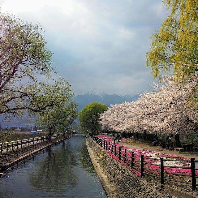 あづみ野やまびこ自転車道 拾ヶ堰 じてんしゃひろば 桜 常念岳