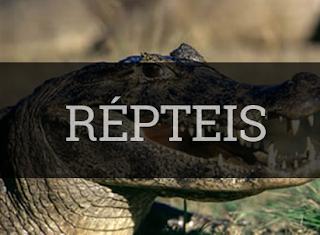 répteis características classificação repodução exemplos habitat