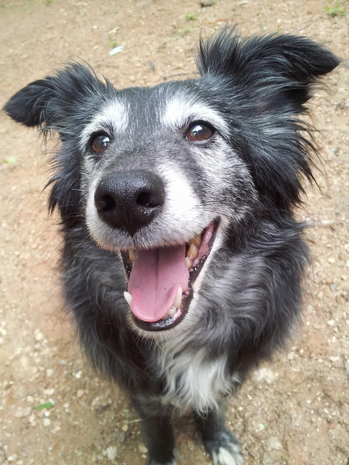 Raise a Green Dog!: National Pet Dental Health Month: Keep ...