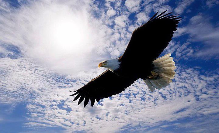Hãy là đại bàng tung cánh trên trời cao