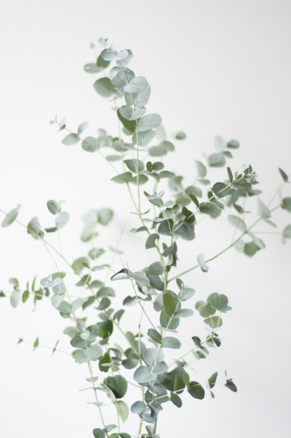 Vosgesparis inspiration for your home botanic prints for plant lovers - Zimmerpflanzen groay ...