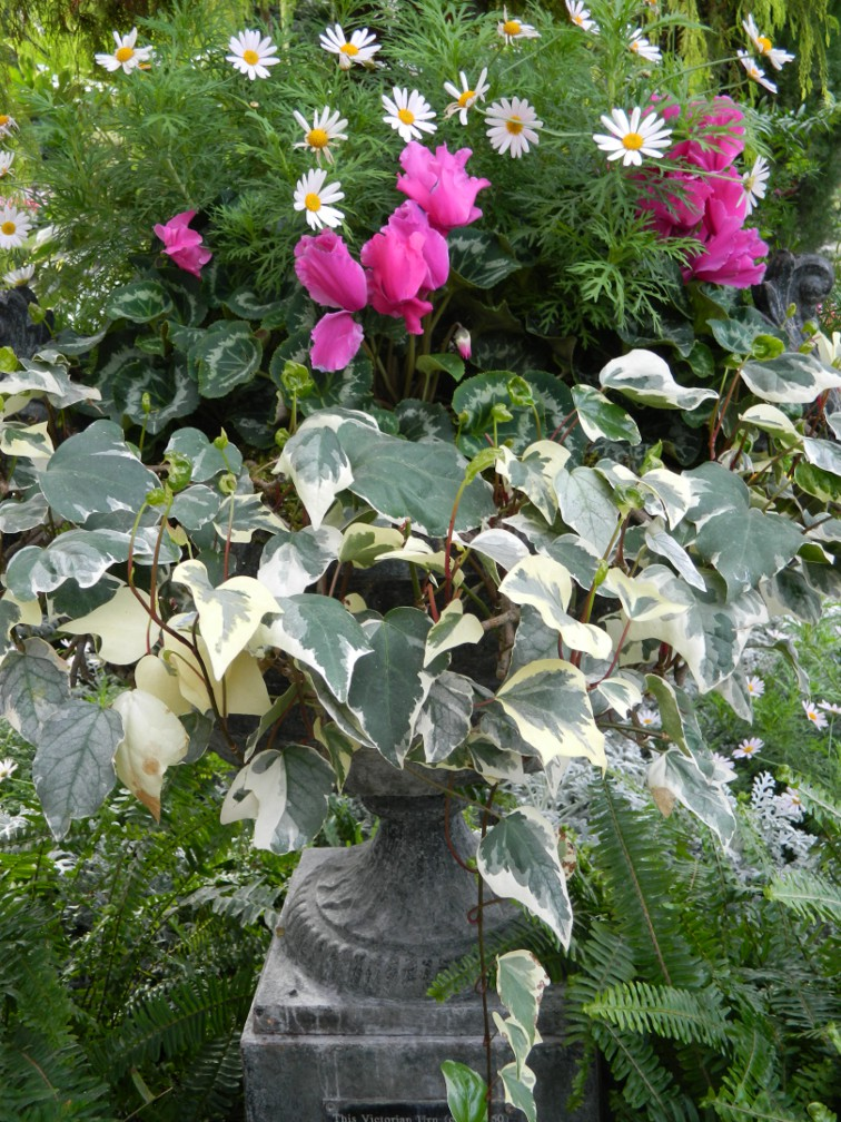 Classic spring urn with variegated ivy, pink cyclamen and white daisies at the Toronto Allan Gardens Conservatory Spring Flower Show 2013 by garden muses: a Toronto gardening blog