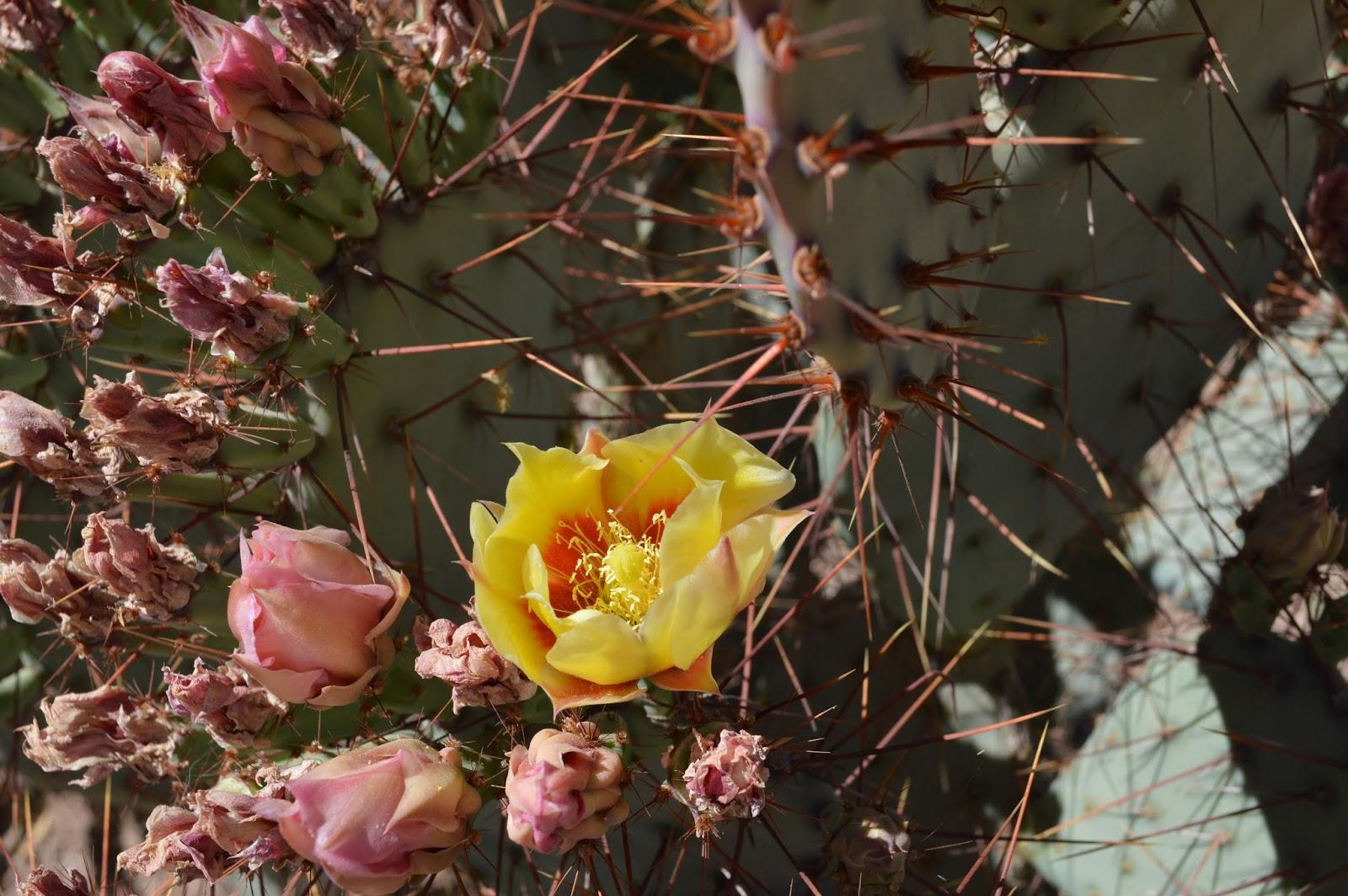 Marifer Blog: Desert Botanical Garden in Phoenix, Arizona