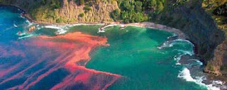 Загадочные явления Мирового океана