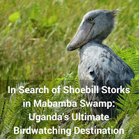 In Search of Shoebill Storks in Mabamba Swamp: Uganda's Ultimate Birdwatching Destination