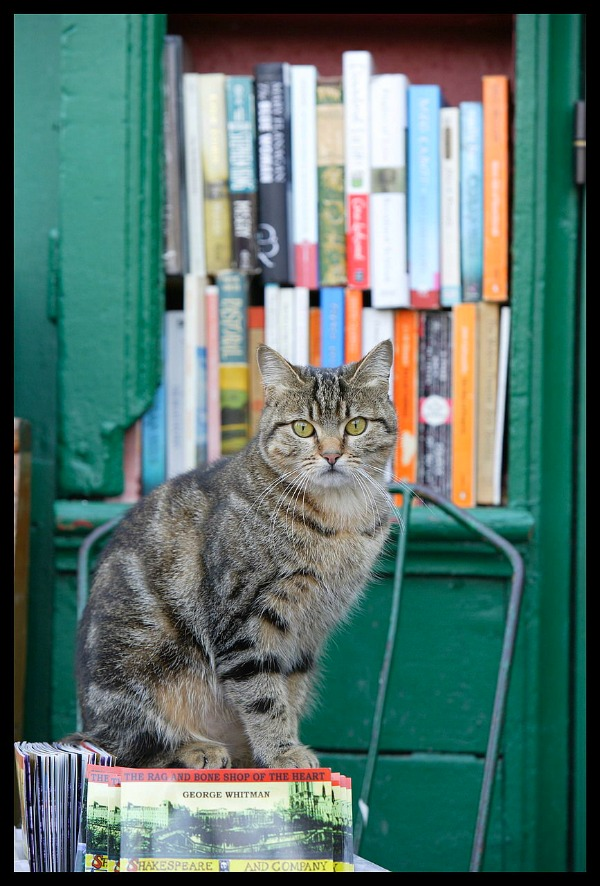 shakespeare and company cat