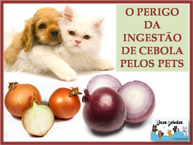 CEBOLA+X+PET.jpg