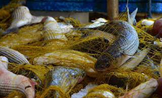 Φορμόλη για τα ψάρια και δικαστήρια για όποιον τολμάει να μιλήσει