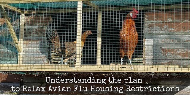 Flyte So Fancy's bird flu measures