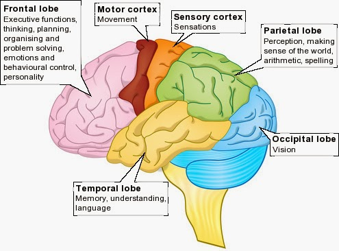 brain structure and memory parts