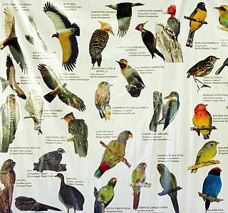 world-of-birds