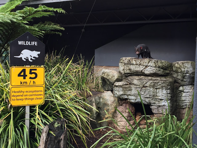 Taronga Zoo - Tasmanian Devil