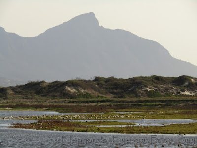 False Bay Ecology Park