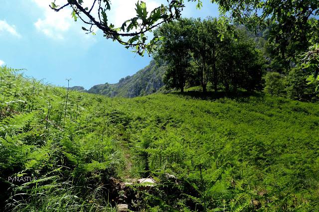 Mayáu L´Arganosa - Parque Natural de Redes