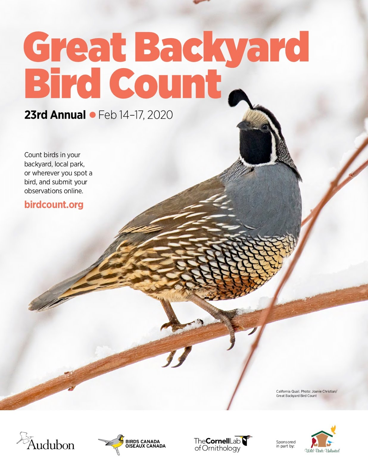 23rd Annual Great Backyard Bird Count