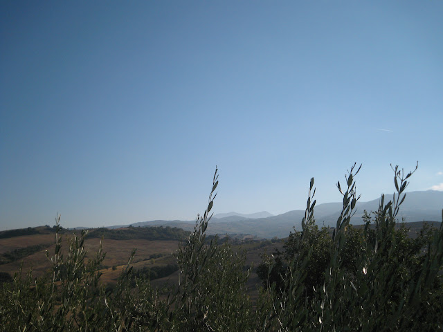 The view from the olive tree: Mont'Amiata