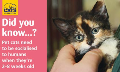 Did you know pet cats need to be socialised to humans when they're 2-8 weeks old?