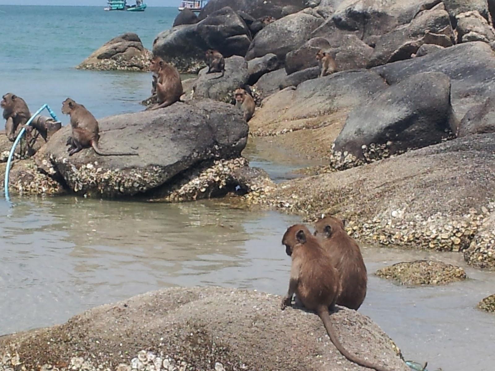 Affen am Strand Khao Takiab Hua Hin