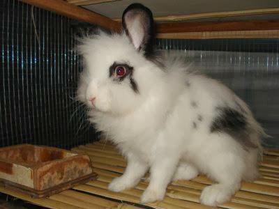 hati-hati membeli kelinci hias