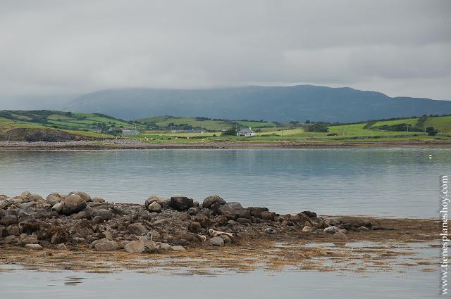 Focas Clew Bay Condado de Mayo Irlanda