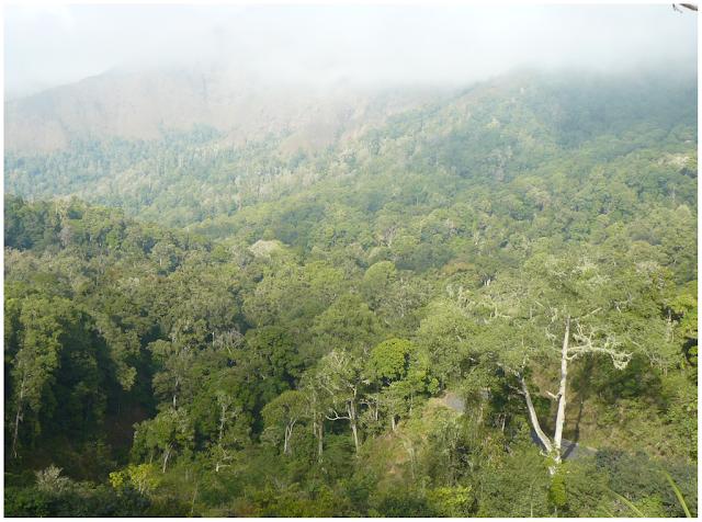 montane rainforest tree species