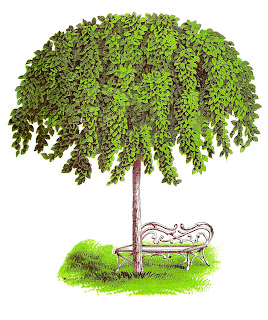tree elm illustration image digital artwork clipart