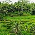 """Subak"" – Bali's Cultural Landscape"