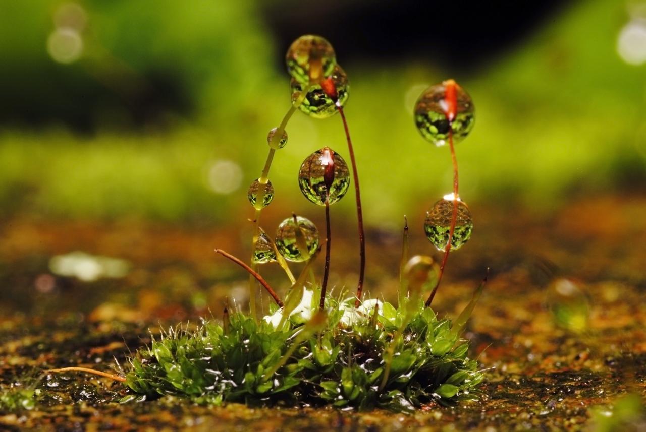 grass macro photography - photo #34