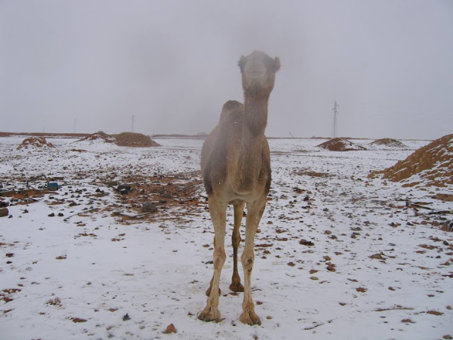 Πρωτόγνωρη χιονόπτωση μέχρι και την έρημο Σαχάρα (βίντεο)