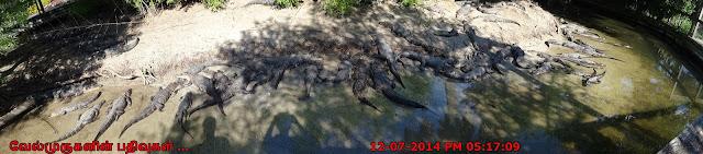Largest Reptile Land MyrtleBeach