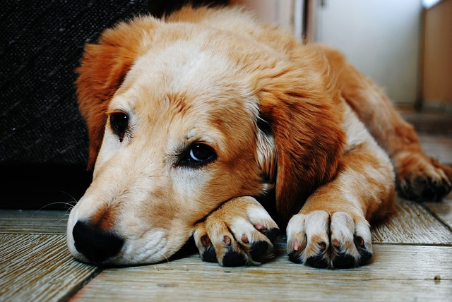 Liver Disease In Dogs And Treatment