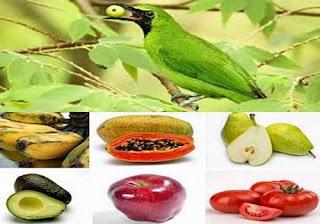 Hasil gambar untuk buah pakan burung