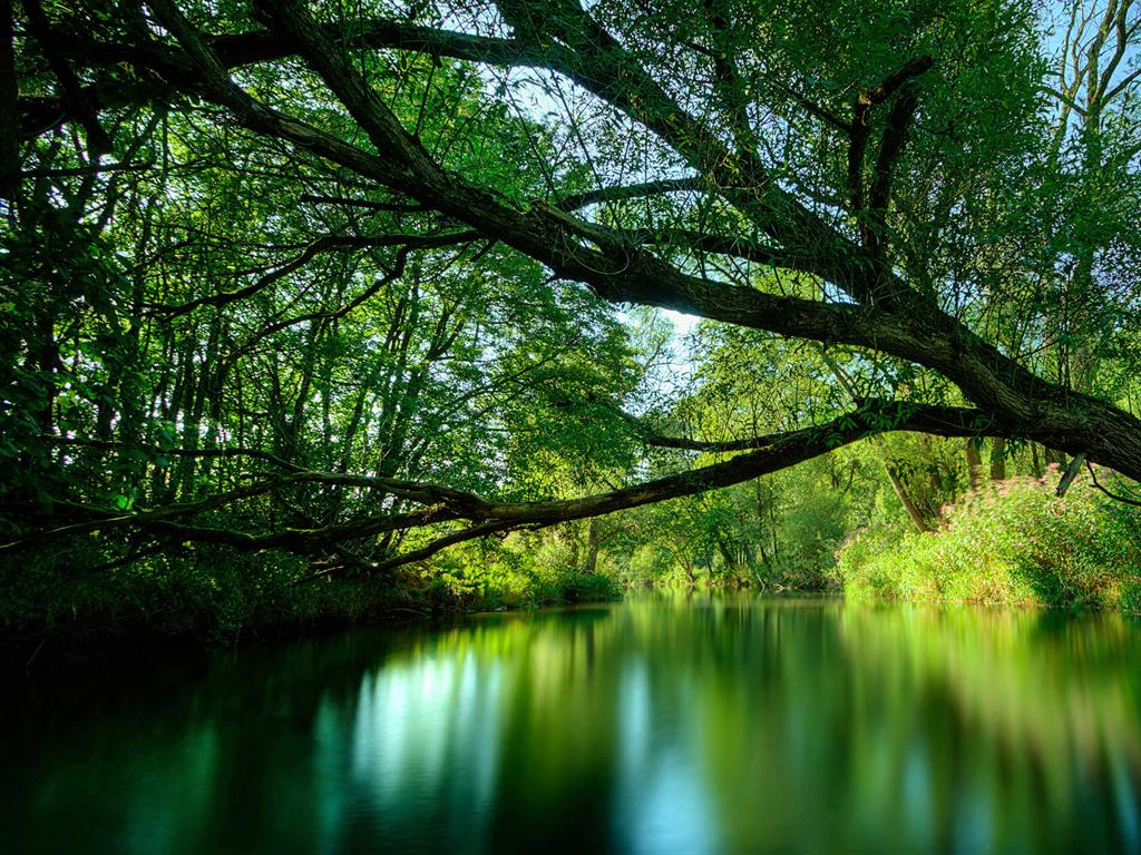 amazing nature wallpaper 1024 x 768