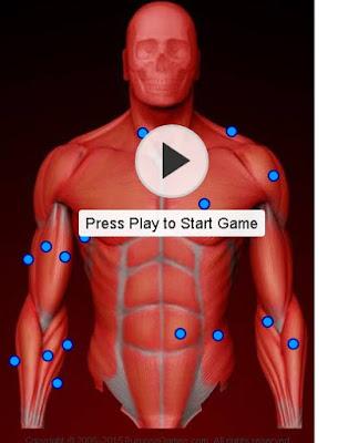 estudando musculos